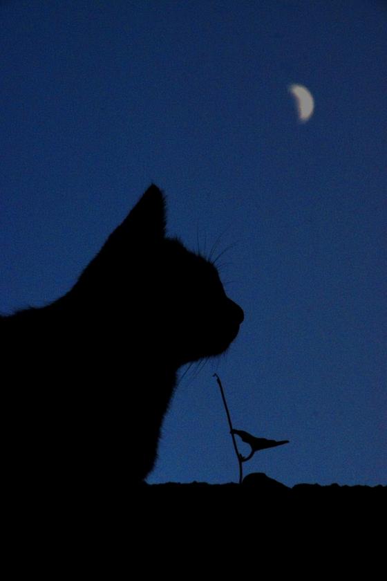 三日月と猫