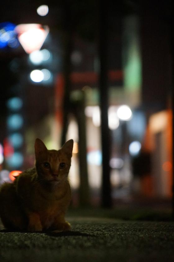 DSC06886_machi_20160910.jpg