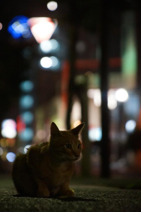 DSC06896_machi_20160910.jpg